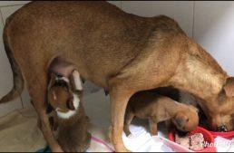 Resgate de Mãezinha e 5 Filhotinhos – Magnéticas em Ação!
